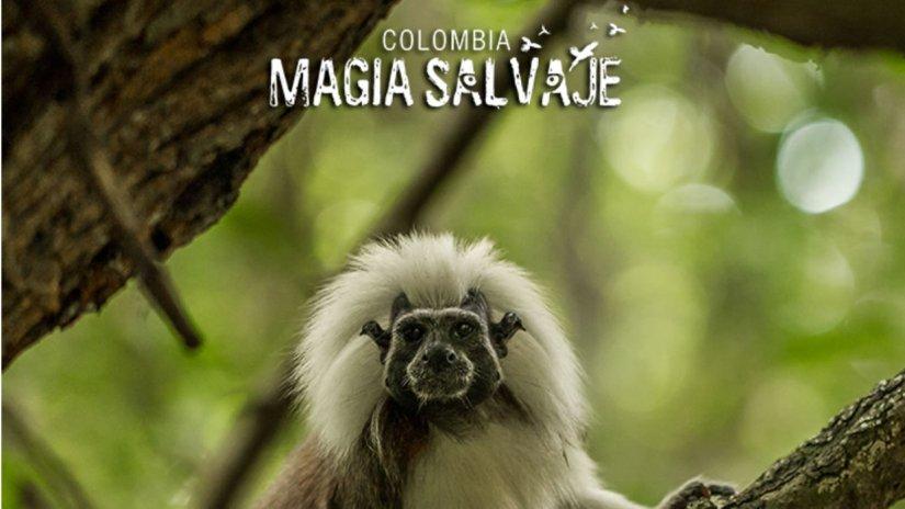 25164135Película-Colombia-Magia-Salvaje.jpg